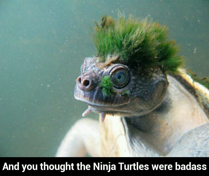 Cool looking turtle