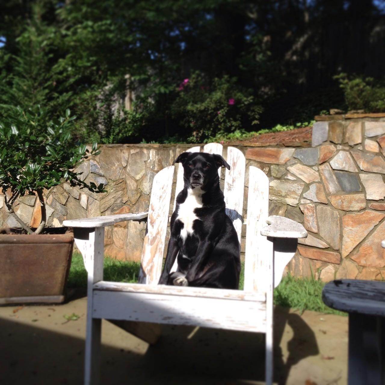 Sullie's favorite seat.