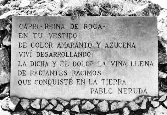 Cabellera de Capri da las uvas y el viento - Pablo Neruda 1954 Capri, reina de roca, en tu vestido de color amaranto y azucena viví desarrollando la dicha y el dolor, la viña llena de radiantes racimos que conquisté en la tierra, el trémulo tesoro de aromay cabellera, lámpara cenital, rosa extendida, panal de mi planeta. Desembarqué en invierno. Su traje de zafiro la isla en sus pies guardaba, y desnuda surgía en su vapor de catedral marina. Era de piedra su hermosura. En cada fragmento de su piel reverdecía la primavera pura que escondía en las grietas su tesoro. Un relámpago rojo y amarillo bajo la luz delgada yacía soñoliento esperando la hora de desencadenar su poderío. En la orilla de pájaros inmóviles, en mitad de del cielo, un ronco grito, el viento y la indecible espuma. De plata y piedra tu vestido, apenas la flor azul estalla bordando el manto hirsuto con su sangre celeste. Oh soledad de Capri, vino de las uvas de plata, copa de invierno, plena de ejercicio invisible, levanté tu firmeza, tu delecada luz, tus estructuras, y tu alcohol de estrella bebí como si fuera naciendo en mí la vida. Isla, de tus paredes desprendí la pequeña flor nocturna y la guardo en mi pecho. Y desde el mar girando en tu contorno hice un anillo de agua que allí quedó en las olas, encerrando las torres orgullosas de piedra florecida, las cumbres agrietadas que mi amor sostuvieron y guardarán con manos implacables la huella de mis besos.