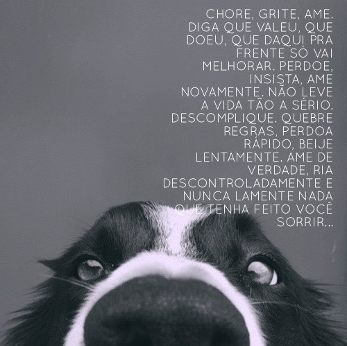 Frases cover image