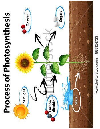 During the process of learning photosynthesis, I thought I understood it, but I discovered that it is way more complicated. Thankfully I gradually began to understand what I was taught during the lessons.