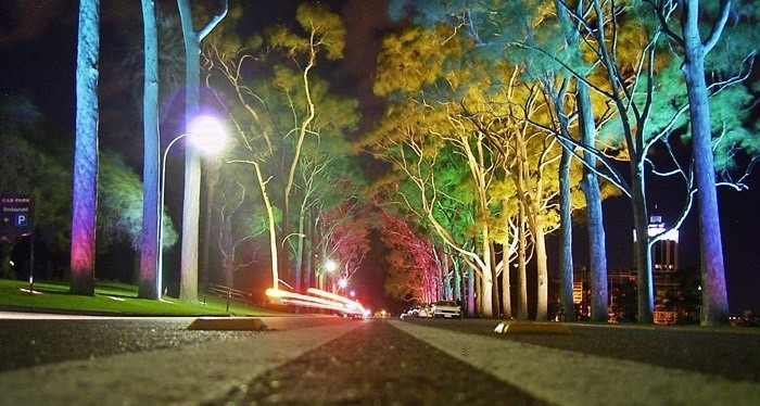 Kings park at night with the beautiful light shining on the trees