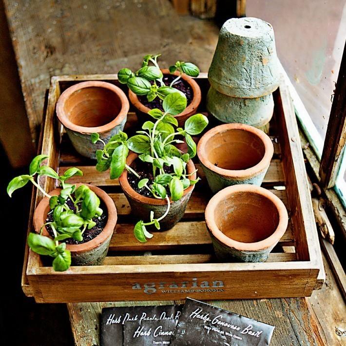 How to Sow Seeds Indoors | Williams-Sonoma Taste