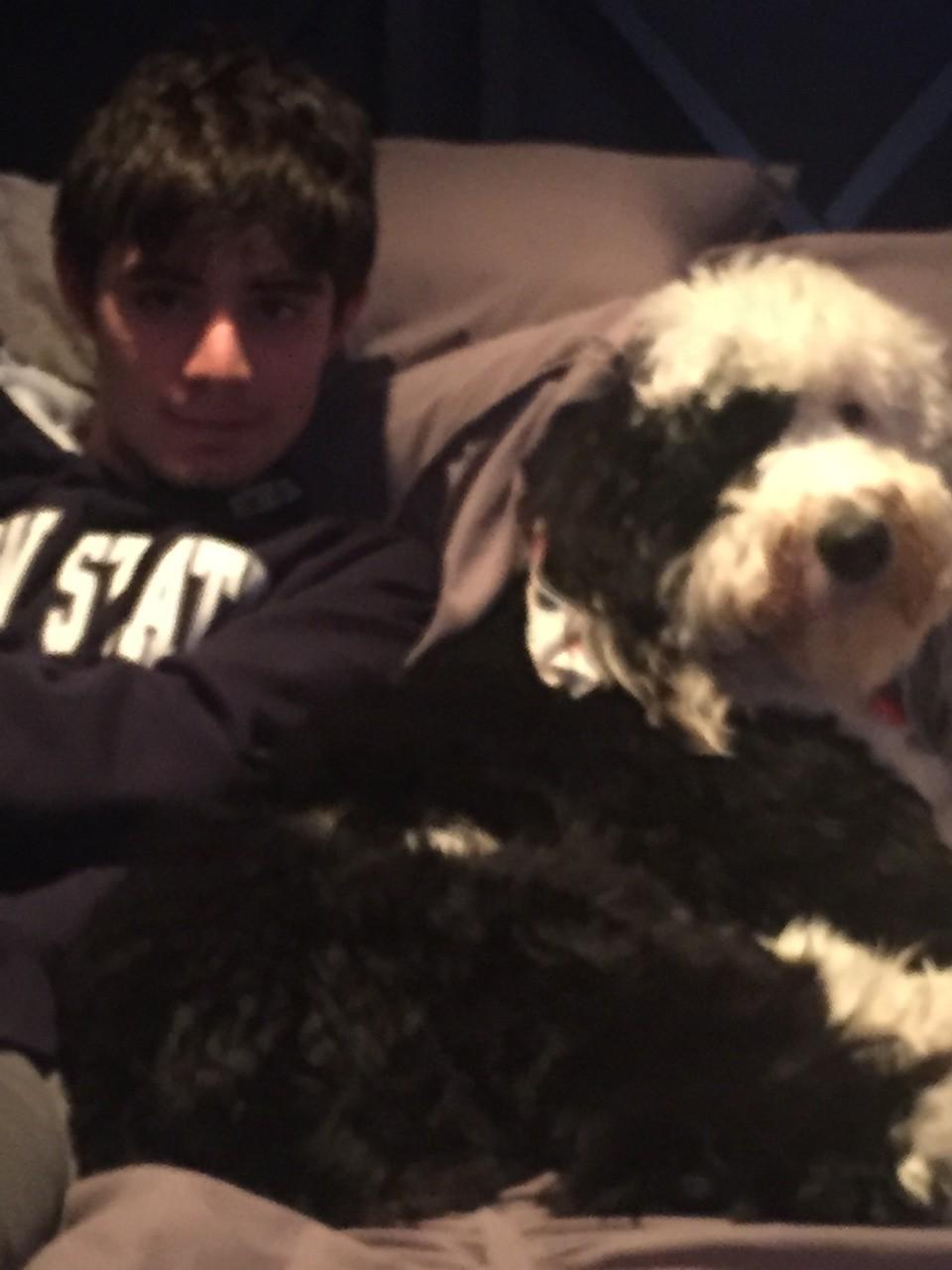 Winston the sheepadoodle dual service dog!!!