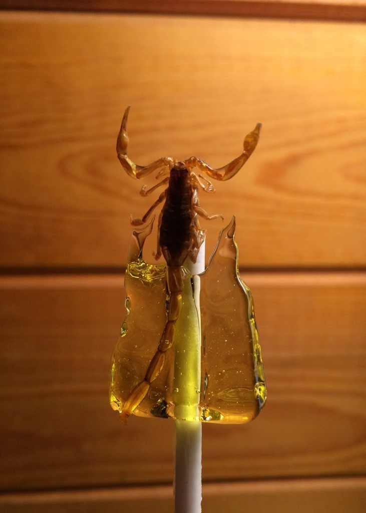 Everything You Wanted to Know About Scorpion Candy
