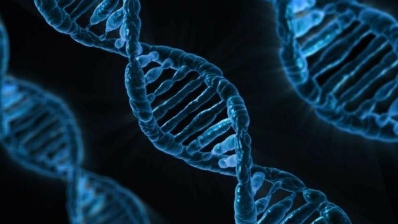 遺伝子技術「CRISPR-Cas9」の特許バトルに裁定、の意味