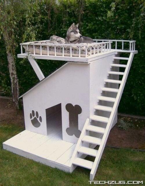 Luxury dog house :)