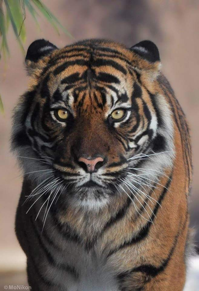 Wildlife cover image