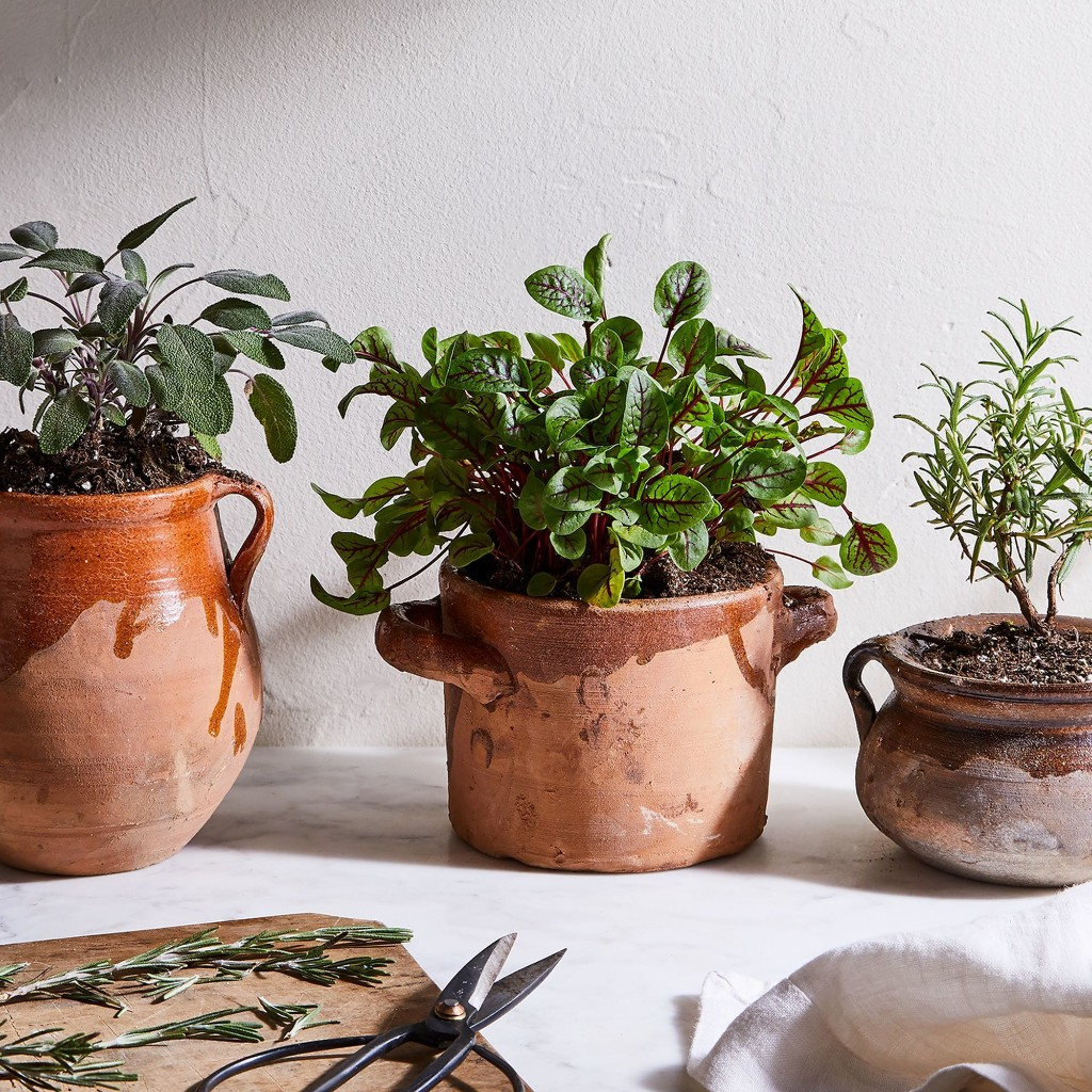 6 Indoor Gardening Projects for *Any* Size of Home