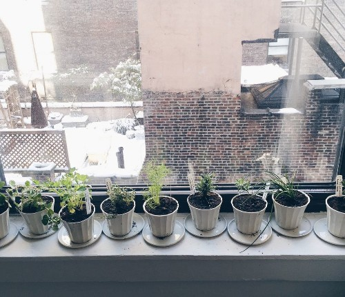 What To Do With Your Herb Garden in Winter