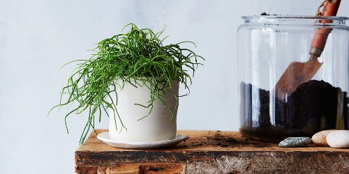 7 Common Houseplant Afflictions & How to Cure Them All