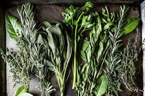 Our Latest Contest: Your Best FreshHerbs