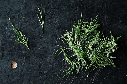 Dill and How to Use It from Stem toSeed