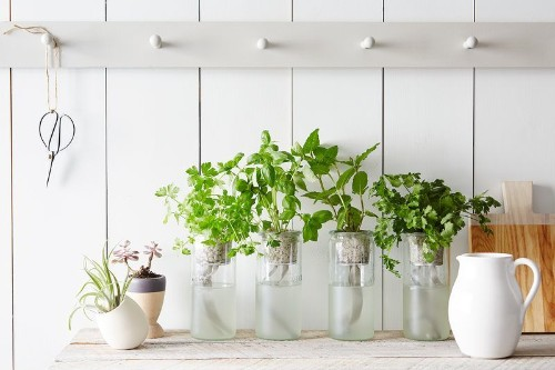Our Best Tips & Tools for Starting an IndoorGarden