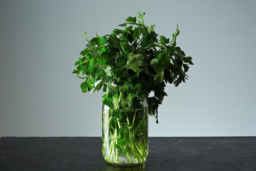 How to Save Fresh Herbs -- Tips for Saving and Preserving Herbs