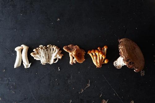 Velvety Mushroom Soup: The Best Use for MushroomStems