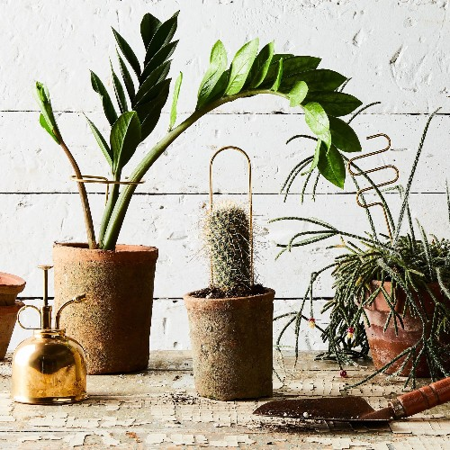 11 Plants That'll Survive (& Thrive) in Your Tiny Bathroom