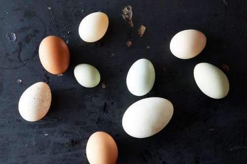 """How to Read an Egg Carton (And Why Terms Like """"Cage-Free"""" AreMisleading)"""