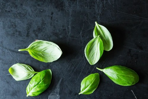 13 of our Favorite Fresh Herbs and How to Use Them