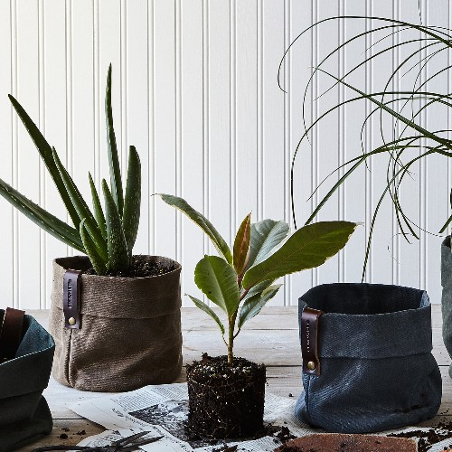 7 Indoor Plants That Are Near-Impossible to Kill