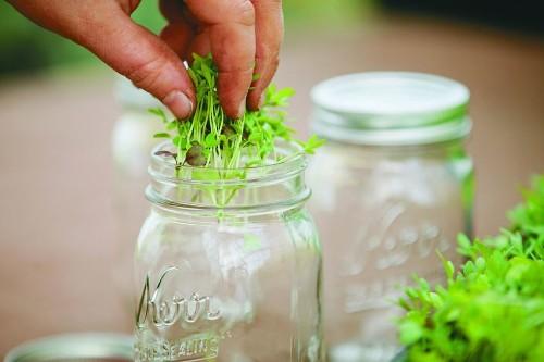 Starting an Indoor Kitchen Garden