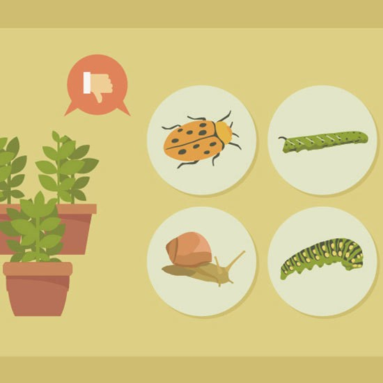 How to Get Rid of Garden Pests For Good