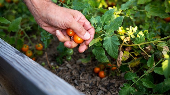 A New Way to Get Food to Those in Need: Help Them Grow It