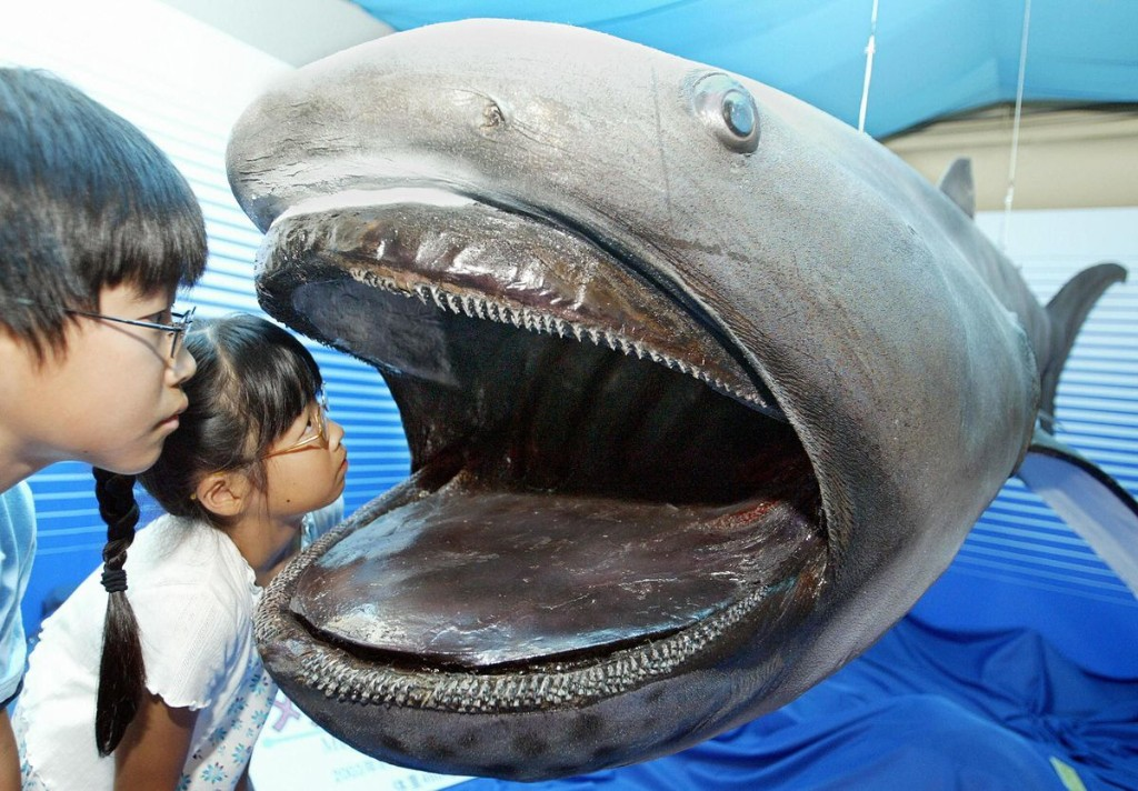 Unraveling The Mystery: How Do Megamouth Sharks Glow?