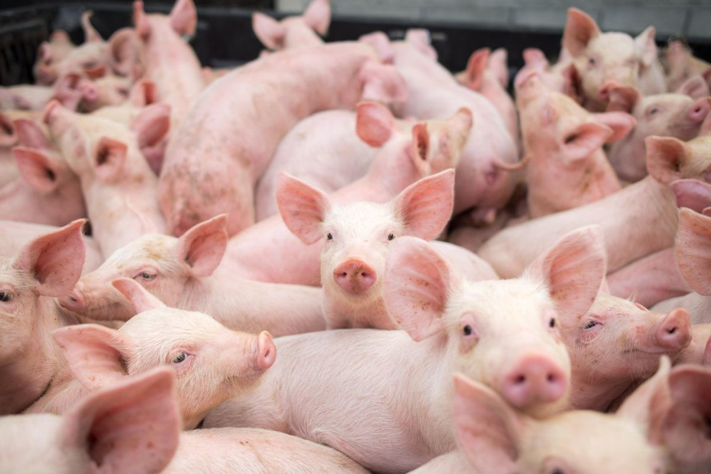 China Continues To Scale Back Meat Imports