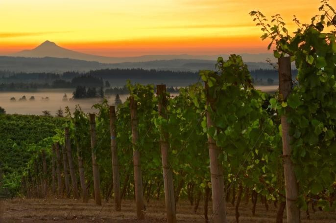 50 Years of Wine Excellence: Oregon's Willamette Valley