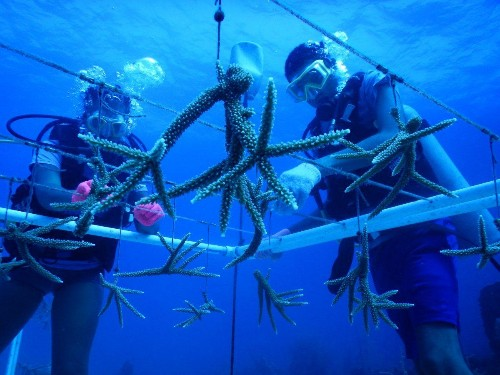 The Cayman Islands Are Trendsetters In Marine Conservation Tourism