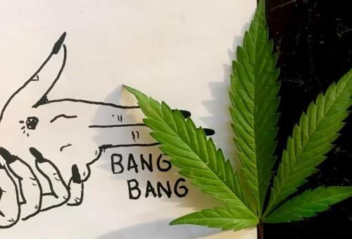 Has Big Cannabis Lost Its Buzz? Marijuana Stocks Suffer As Markets Experience A Correction