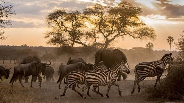 The African Safari of Your Dreams