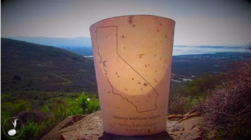 California Entrepreneur Invents Coffee Cups That Can Revive Forests