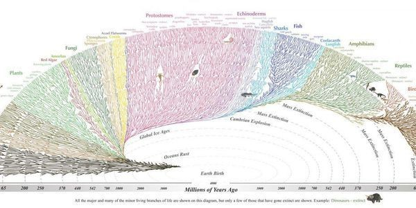 One Big Family: This Beautiful Interactive Diagram Shows How Every Organism Is Related