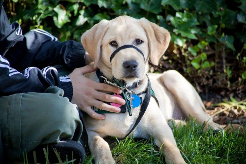 Setting The Stage For A New Guide Dog