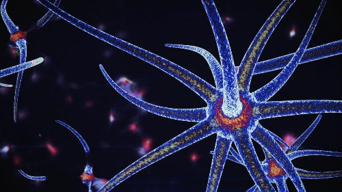 Can The Octopus Brain Save Humanity?