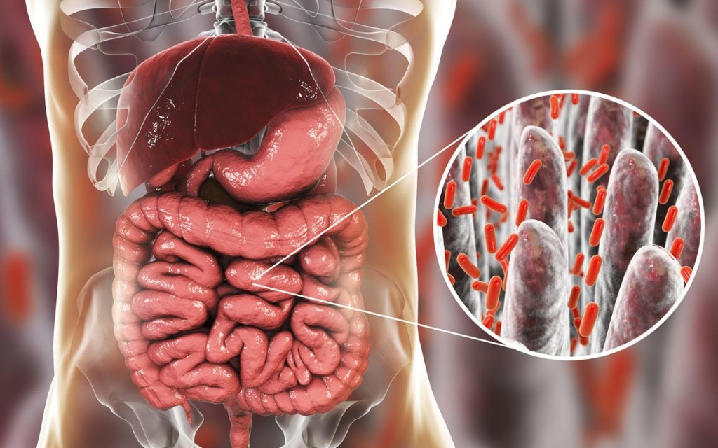 Bacteria Linked With Symptoms Of Irritable Bowel Syndrome