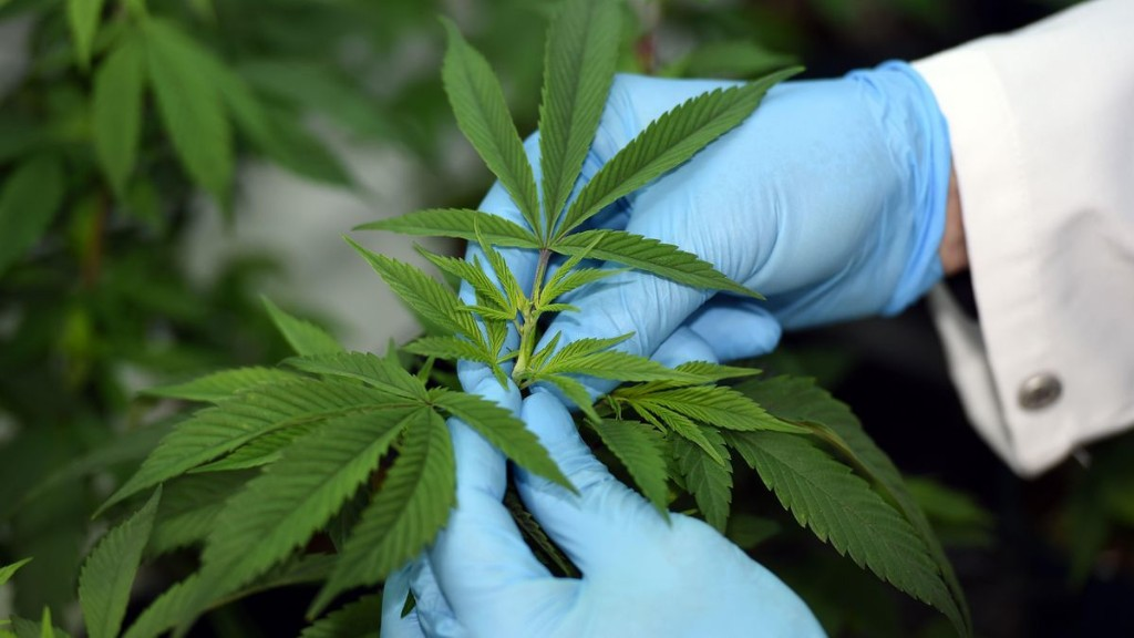 THC Prevents Colon Cancer In Mice, Findings Suggest