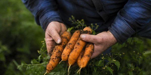 3 Innovative Ways Blockchain Will Build Trust In The Food Industry