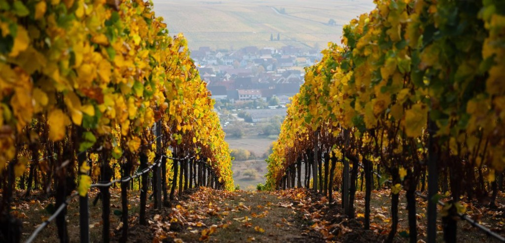 Vineyards And Wineries  cover image