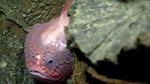 How These Fishes Can See Color In The Light-less Depths Of The Ocean