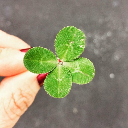 Here's How To Get Lucky In Your Career