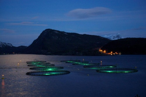 This Startup Is Raising $3.5 Million To Add Machine Learning To Fish Farms