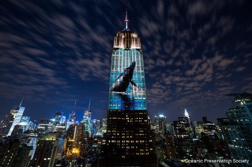 Marine Life Gets Major Screen Time in 'Racing Extinction', Airing Tonight