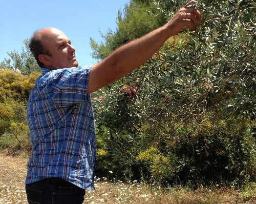 Branding Briefing: How Some Greek Olive Farmers Are Making More Money Selling Less Oil