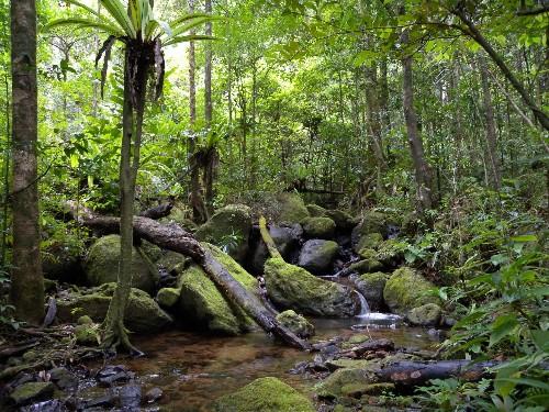 Resurgent Vegetation Sucks 4bn Tons Of Carbon From The Air