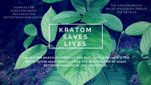 The Benefits Of Kratom, And Risks Of Kratom Extracts, From The People Who Use The Botanical Medicine