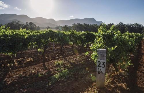 Australia's Hunter Valley Is The Next Big Wine Region To Watch
