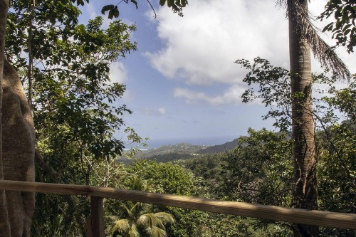 Agro-Forestry Project Brings Blue-Green Therapy To Barbados